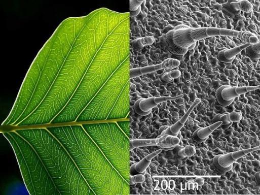 immagine-di-una-foglia-al-microscopio
