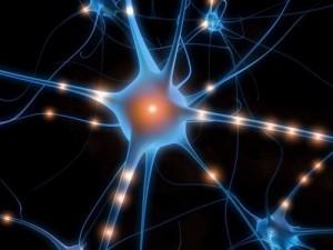 cervello1-300x225